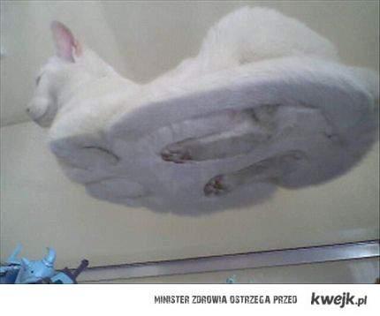 Kot leżący na szybie .
