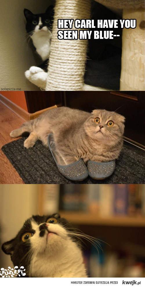kocie buty
