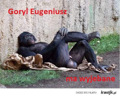 Goryl Eugeniusz