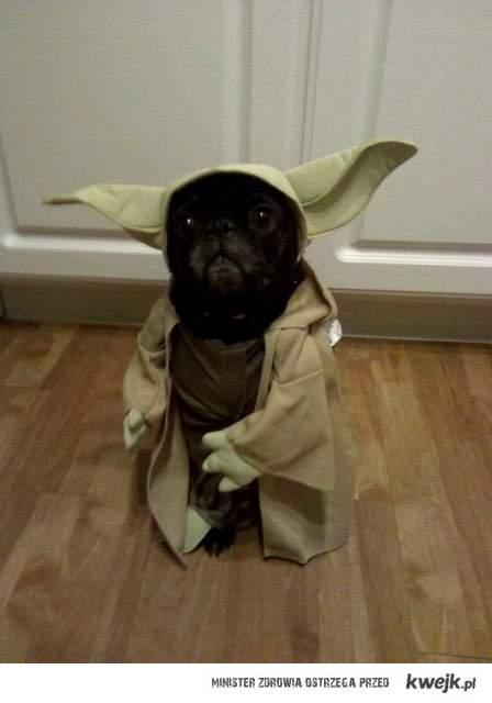 Yoda I'am