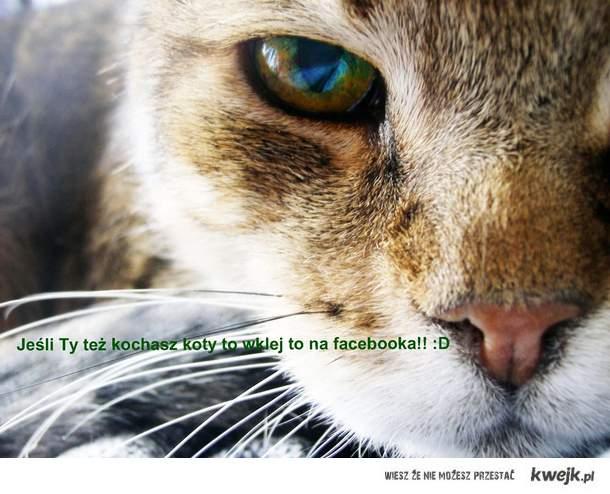 Miłość do kotów :D