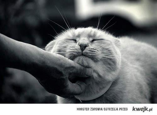 cute cat .