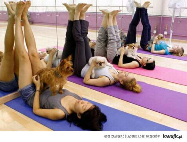 Doggy Yoga