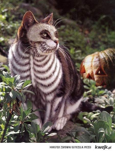 kot na halloween