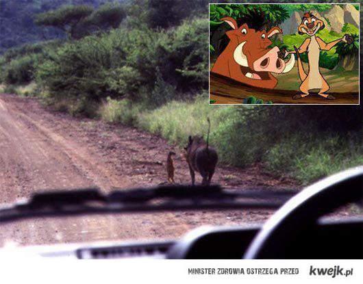 Timon i Pumba real