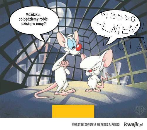 Minky & Mózg