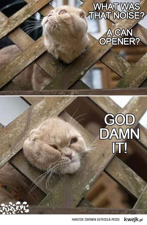 Kot w płot