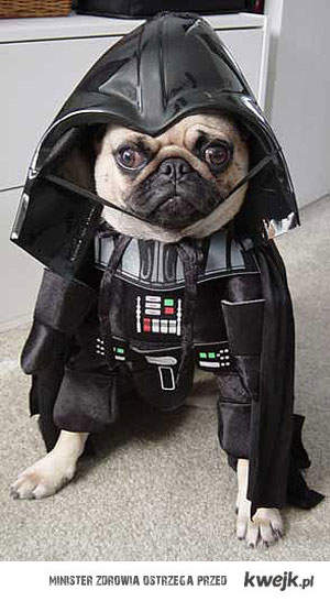 Vader Dog