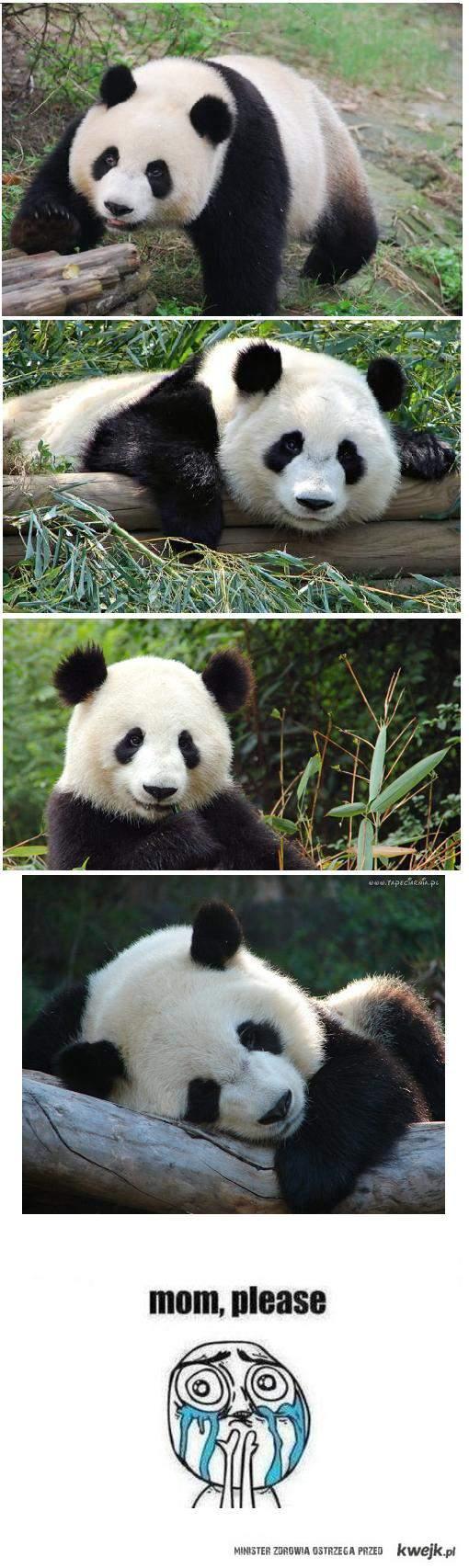 pandaa ♥