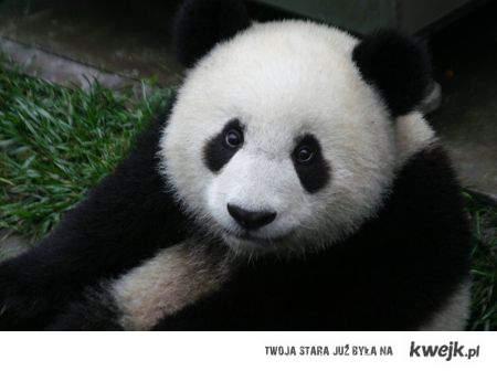 Jak mozna nie lubic pand ??