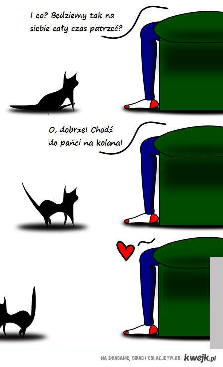 3 koty