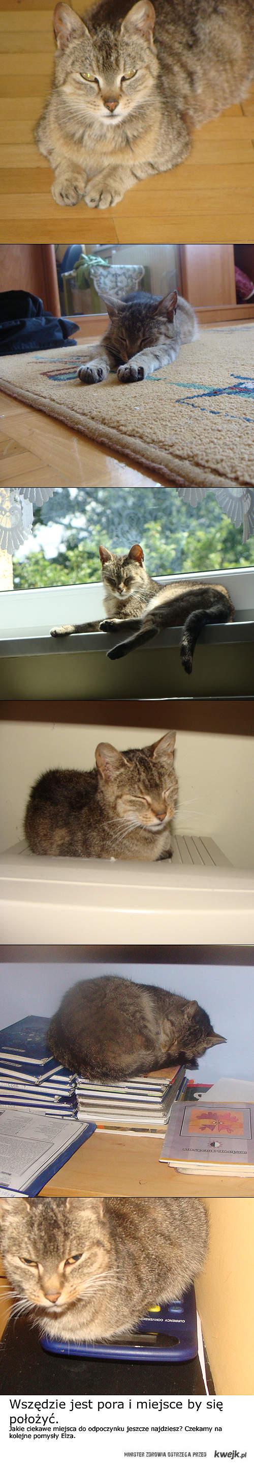 gdzie ten kot jeszcze najdzie miejsce na odpoczynek