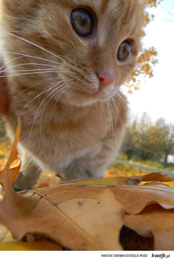 Jesienny koteczeeek