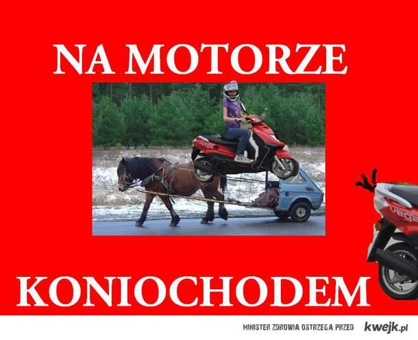koniochód