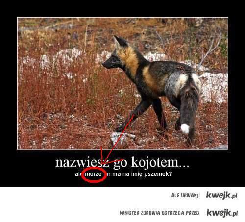 Polscy Analfabeci