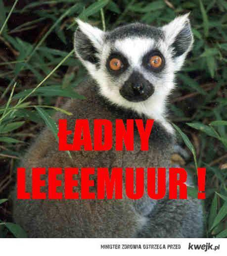 lemur ;3