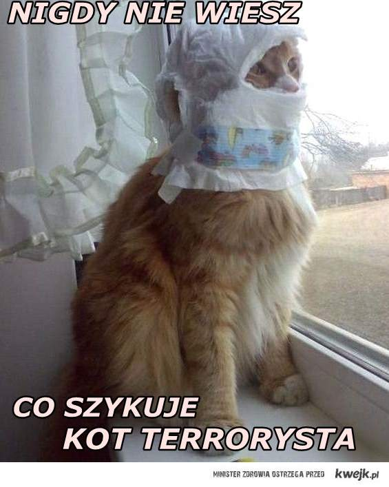 Kot_terrorysta.