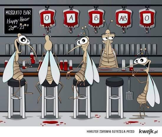 komary w barze