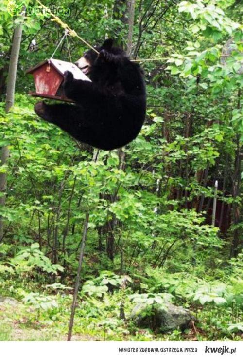 Niedźwiedź ninja