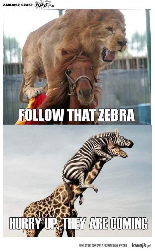Za żyrafą !