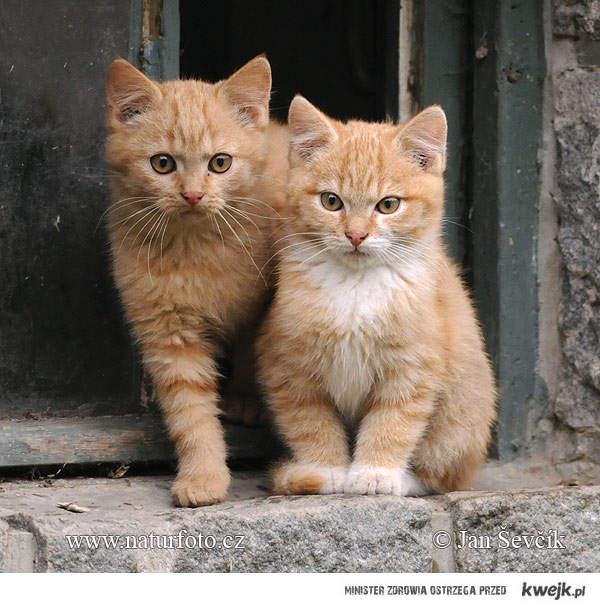 Te Koty Się Kochają :33