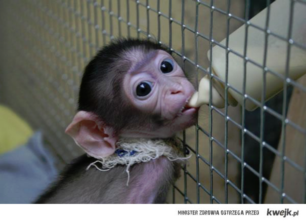Małpka. <3