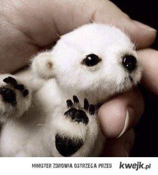 mały niedźwiadek polarny :3