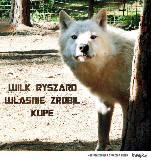 Wilk Ryszard
