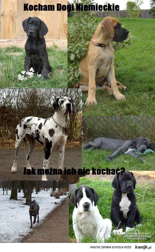 Dogi Niemieckie ♥