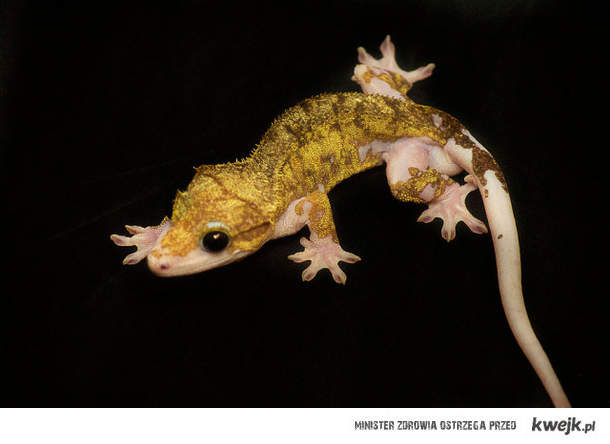 albinos -.-