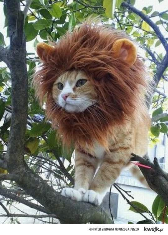 Lew czy kot?