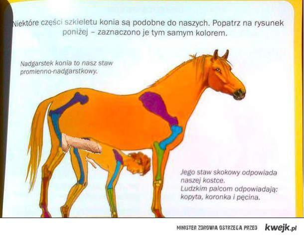 kon z duzym w