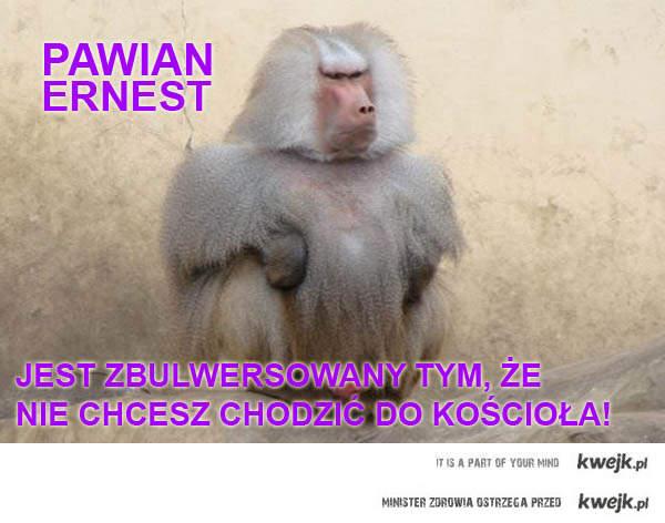 Pawian Ernest