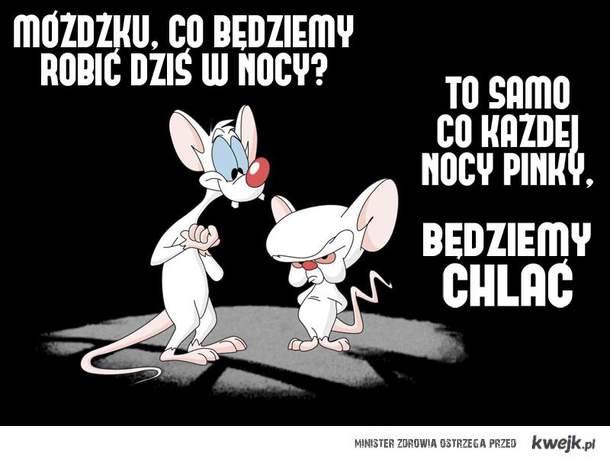 Pinky i Mózg