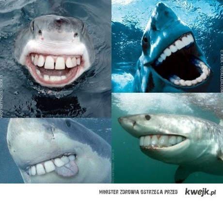 Przyjazne rekiny