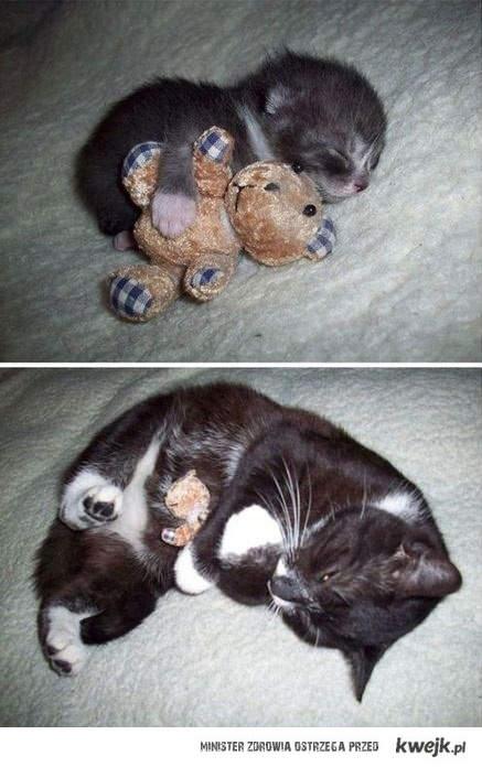 Kot ze swoim misiem