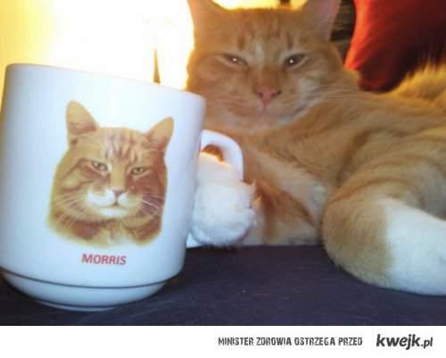 Kot ze swoim kubeczkiem