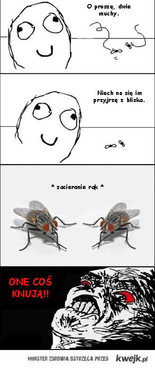 knujące muchy