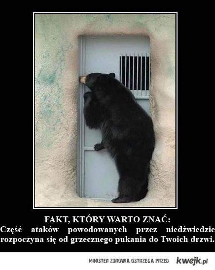 pukający do drzwi niedźwiedź