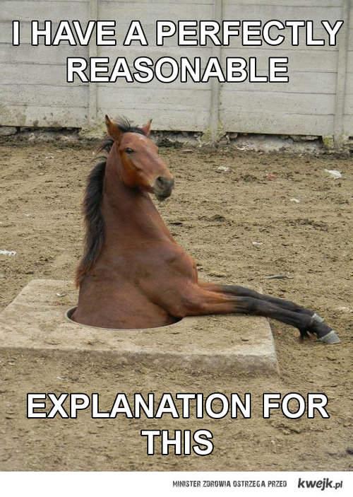 koń w dziwnej sytuacji