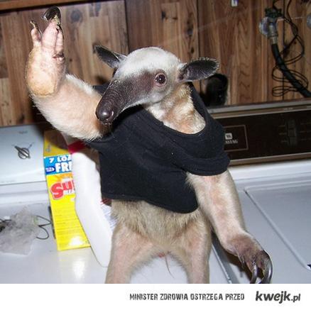 Nie wiem co dodac to dodaje mrówkojada w swetrze.