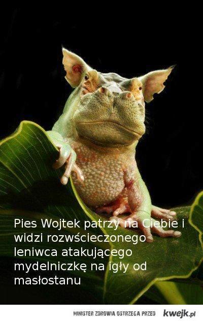 Pies_Wojtek