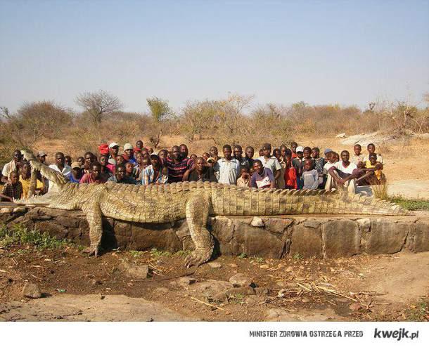 Krokodyl z Cape May