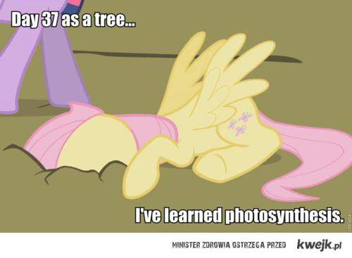 pfotosynteza