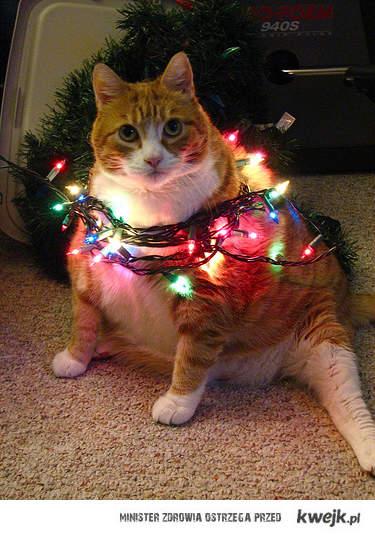 Przygotowany do świąt