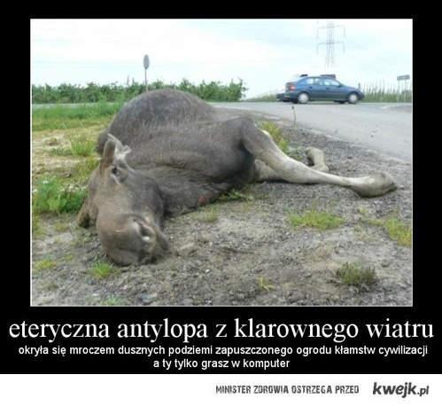 leżące zwierzę