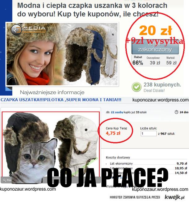 Kot z grupowych zakupów