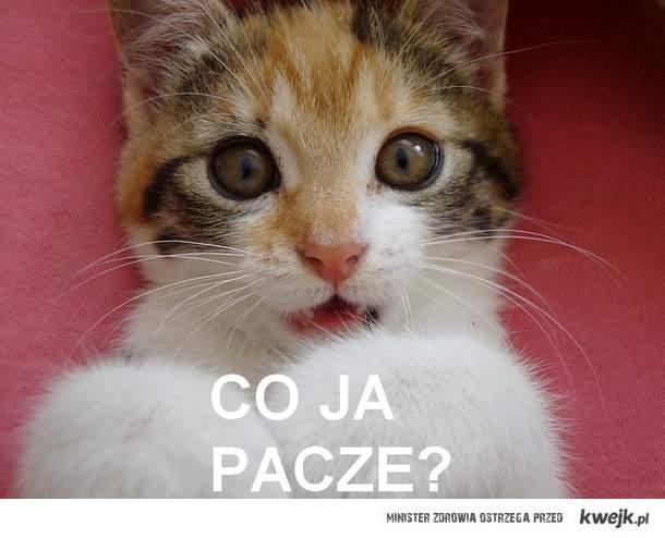Co Ja Pacze?