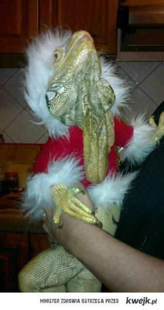 Takiego Św. Mikołaja jeszcze świat nie widział!!!!