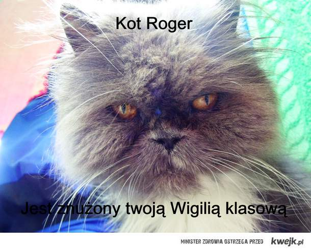 kot roger jest znużony twoją wigilią klasową !